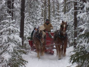 Winter holiday with sleigh ride in the Canadian Rockies