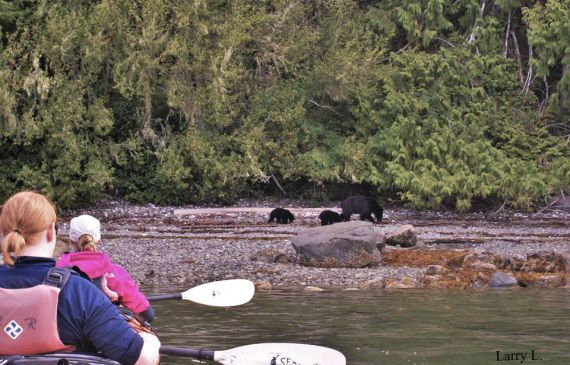 kayak for bear watching on Vancouver Island, British Columbia
